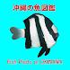 沖縄の魚図鑑