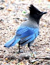Photo: (Year 2) Day 349 - Beautiful Bird
