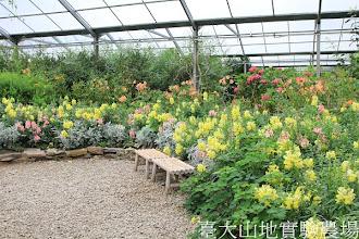 Photo: 拍攝地點: 梅峰-溫帶花卉區 拍攝日期:2012_07_18_FY