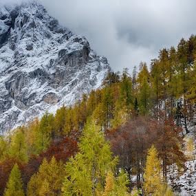 by Jani Novak - Landscapes Mountains & Hills ( monuntains trees autumn winter )