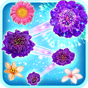 Blossom Crush icon