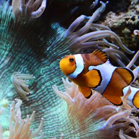 by Randy Wilkinson - Animals Fish ( sea creatures, underwater life, ocean life,  )