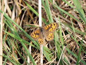 Photo: Wall brown