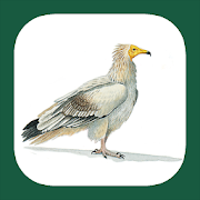 App Icon for Birds of North Africa App in Czech Republic Google Play Store