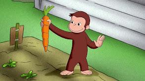 Auctioneer George; Sock Monkey Opera thumbnail