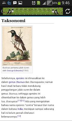 Kicau Master Jalak Suren - screenshot