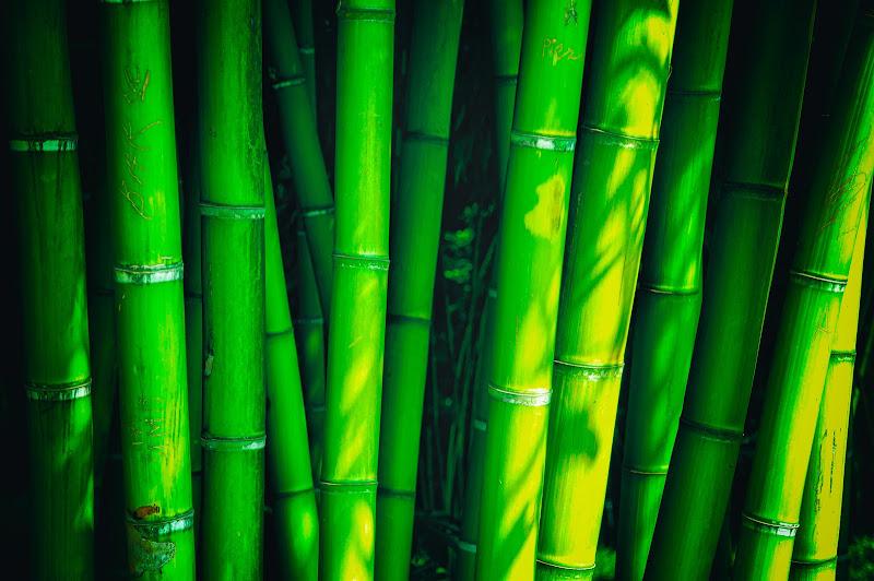 Barriera verde di Sergio Locatelli
