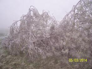 Photo: zamrzlé stromy