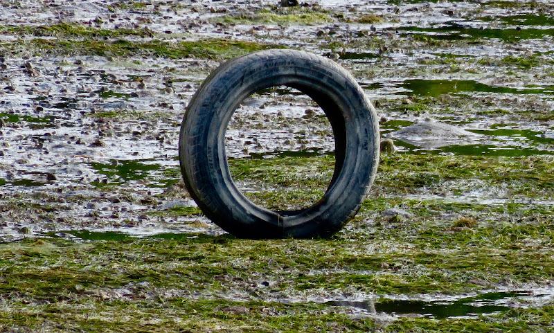 che ci fa il pneumatico in laguna? di mariellaturlon