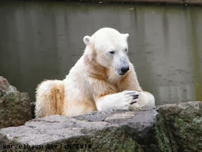 Photo: Bye for today wuenscht Knut :-)