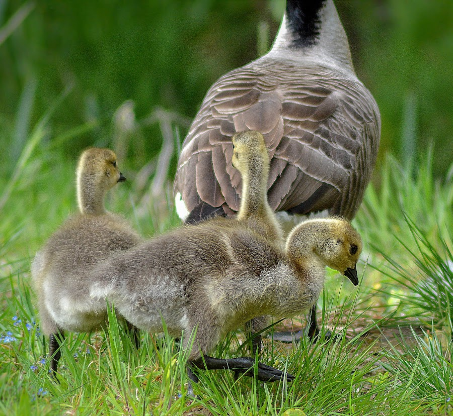 Following mum by Kathleen Brady - Animals Other