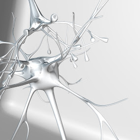 Neurons White on White Silver by Emily Fnm3d - Print & Graphics All Print & Graphics ( motor neurons, nerve cells, animal brain, dendrite, dendrites, science, anatomy, receptor, neuronal processes, human cell, synapse, metallic, medicine, brain, biology, shiny, beauty and health, axons, silver, cell, white, neuron, research, nerve cell, medicine and science, 3d, nerve cell body, axon, human nervous system, animal cell, three-dimensional shape, healthcare and medicine, neurons, nucleus, small, energy, hormone )