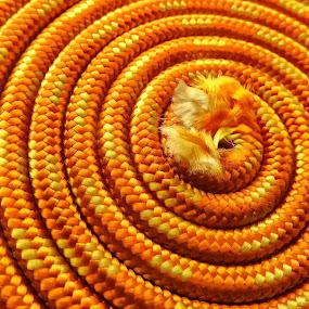 Rope by Ana Paula Filipe - Abstract Patterns ( abstract, orange, rope, nylon, circle )
