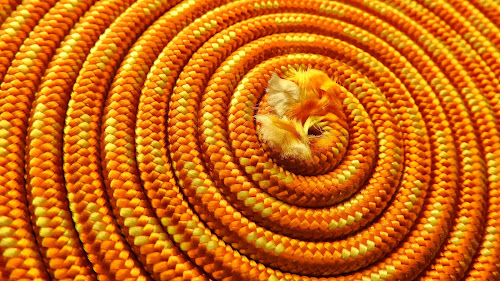 Rope by Ana Paula Filipe - Abstract Patterns ( abstract, orange, rope, nylon, circle )
