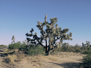 Photo: Joshua Tree Forest Parkway of Arizona, Hwy 93 - Color Version - This image is as close to true color as I could get, since I was starting with a JPG image.  See the monochrome version for better detail of high desert and rugged landscape.