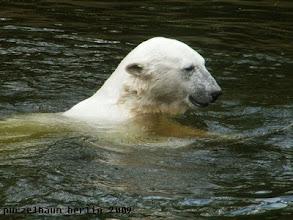 Photo: Was hat Knut nun entdeckt ?