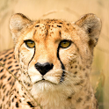 Wild Cats Sounds and Checklist icon
