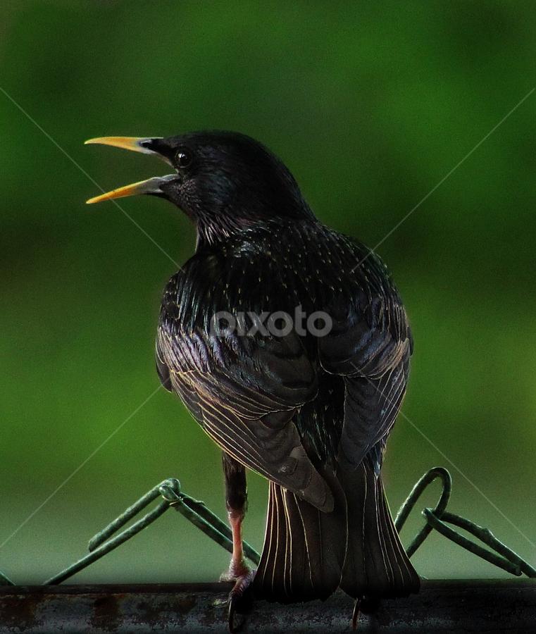 by Joyce Williams Carr - Animals Birds
