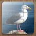 Bird Puzzle Games Free