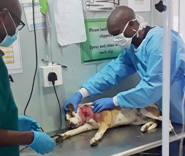 Dogs shot 'for no reason' with rubber bullets in Khayelitsha lockdown - SowetanLIVE