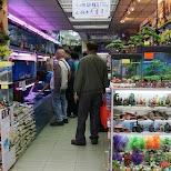 Goldfish market in Hong Kong in Hong Kong, , Hong Kong SAR