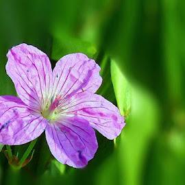 Wrinkled Beauty by Zuzana Stolzová - Uncategorized All Uncategorized ( wild life, nature, wildflower, beauty, flower )