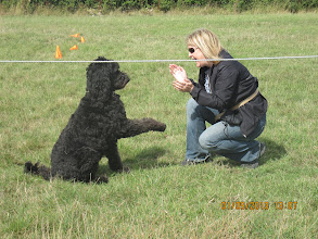 Photo: Ralph Labradoodle and Lisa in Best Trick