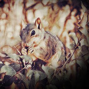 Breakfast time by Sherry Dennis - Animals Other Mammals