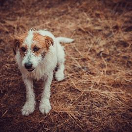 by Александар Петрески - Animals - Dogs Portraits