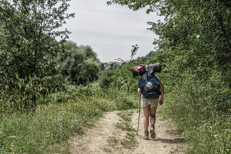 La Via Francigena di Domenico Cippitelli