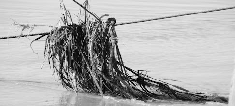 Photo: Day 161 - Weed Debris in River Oxus