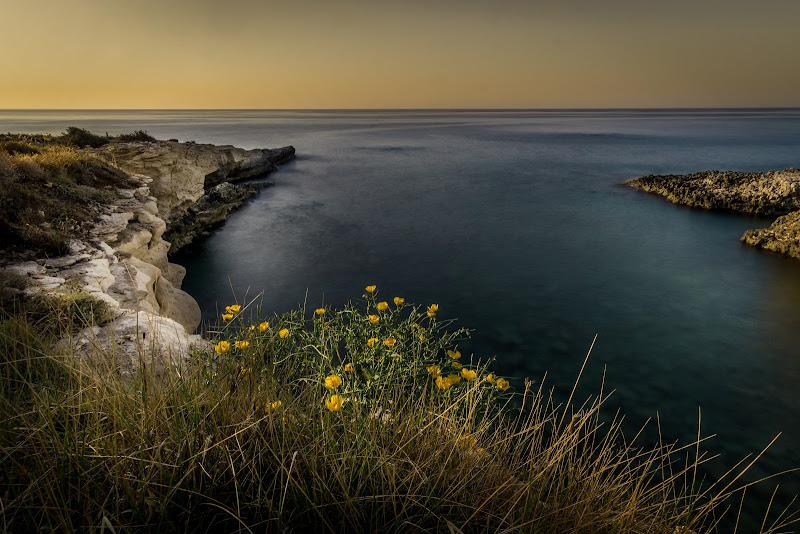 scogliera del gelsomineto  - Sicilia - di aliscaforotto