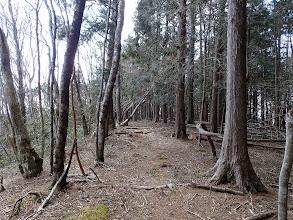 傾斜が緩み植林に(1351m付近)