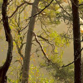 Early morning by Alf Winnaess - Uncategorized All Uncategorized