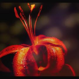 Red Wonder by Dave Walters - Digital Art Things ( macro, artistic, abstract, topaz studio, colors, lumix camera, digital art,  )
