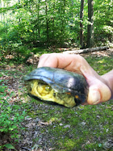 Photo: Turtle Up Close and Personal