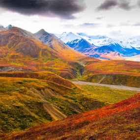 Denali in the fall by John Krivec - Landscapes Mountains & Hills ( denali national park in the fall )