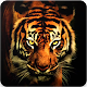 Download Tiger Wallpaper For PC Windows and Mac