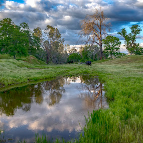 Backroad View by Janet Martinez - Landscapes Mountains & Hills ( clouds, sky, headinghome, sierrafoothills, reflections, meadows, backroads )