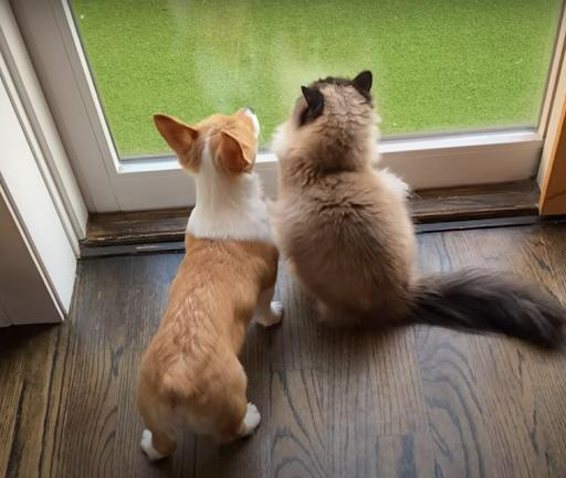 Unlikely Friends: Cat Lavishes Love On Baby Deer In Cutest TikTok Video
