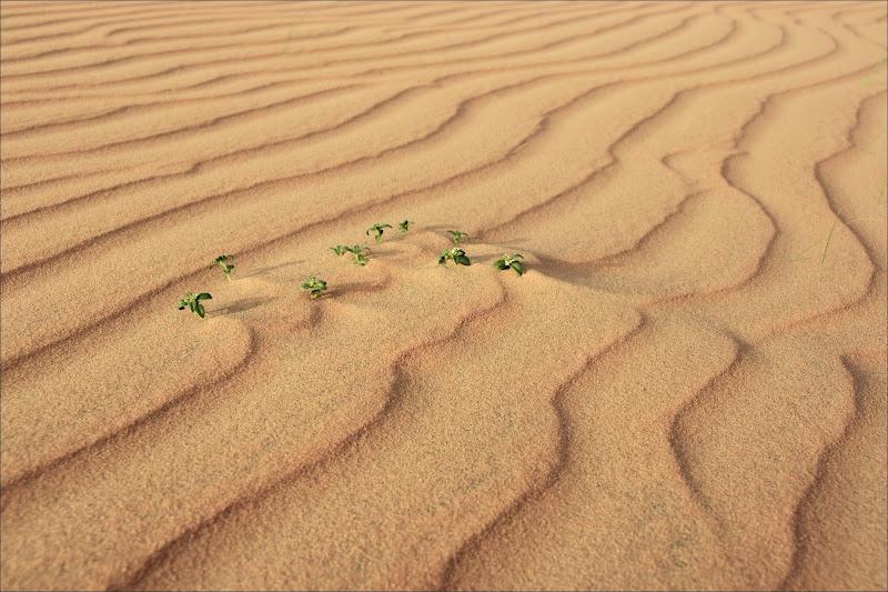 Strenua resistenza alla desertificazione di alberto raffaeli