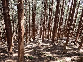 植林の中の作業道