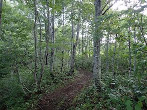 ブナ林の中を進む