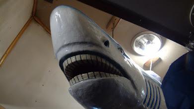 Photo: Скорее всё же акула