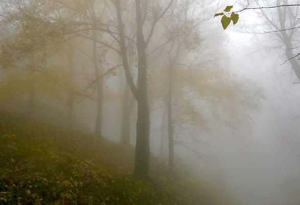 Nella nebbia di aliscaforotto