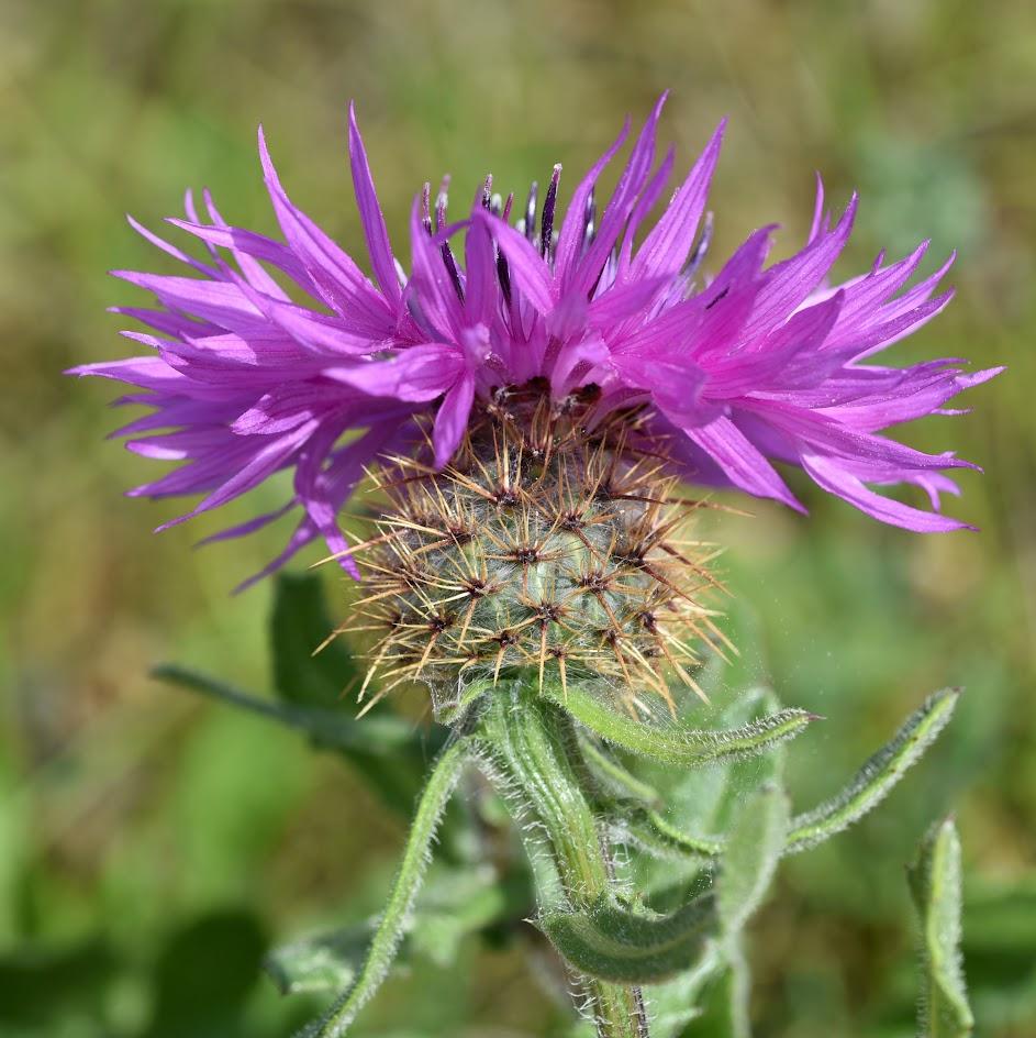 bloem en omwindselblad