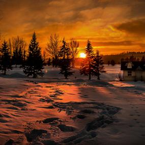Edmonton City Park by Joseph Law - City,  Street & Park  City Parks ( footprints, winter, hut, snow, trees, sunshine, edmonton, city park )