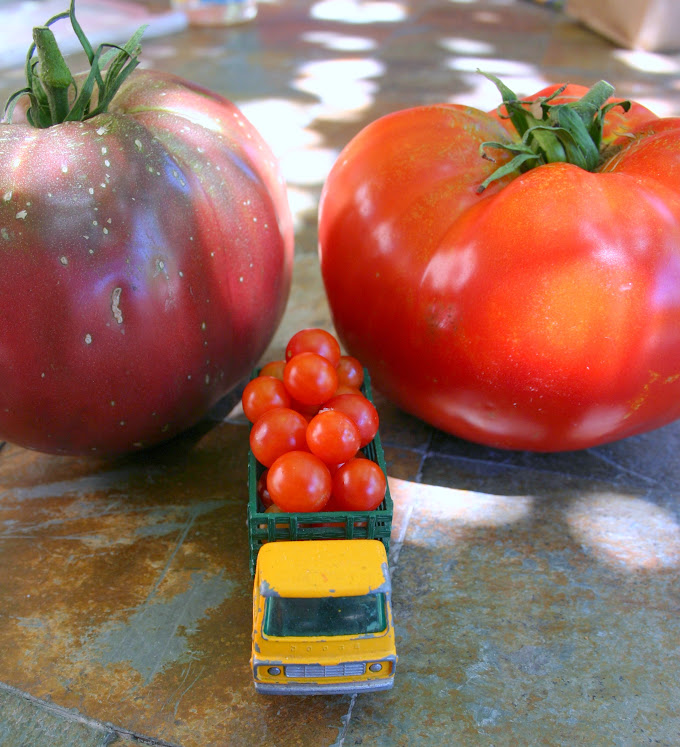 tomatoes and toy truck for scale