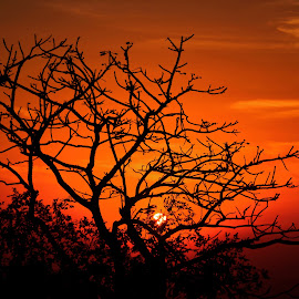 Sunset by Himanshu Nagpal - Nature Up Close Trees & Bushes ( gujarat, sunset, sunshine, nikon, sunlight,  )