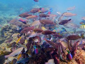 Photo: Feeding shoal, Miniloc Island Resort reef, Palawan, Philippines.